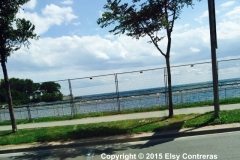 Along-Lake-Shore-Blvd