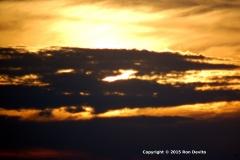 DSC_0098-copyright-wb